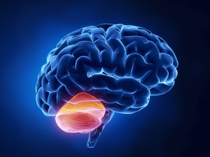 Meet Your Cerebellum: The Link Between Movement and Learning