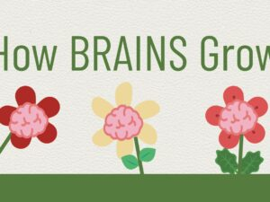 Growing Brains-Infographic
